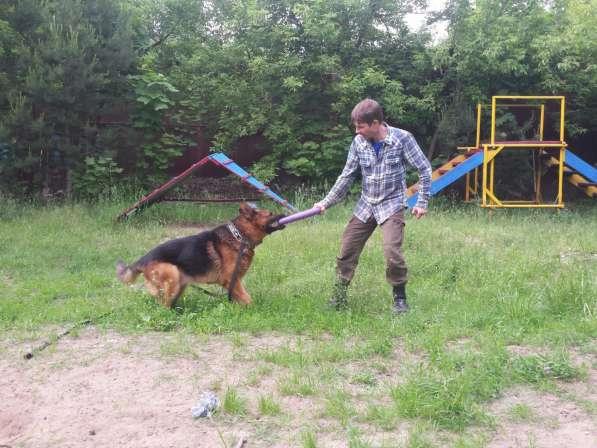 Передержка и дрессировка собак в Раменское фото 5