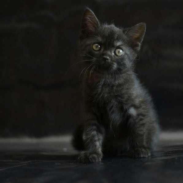 Котята в Санкт-Петербурге фото 3