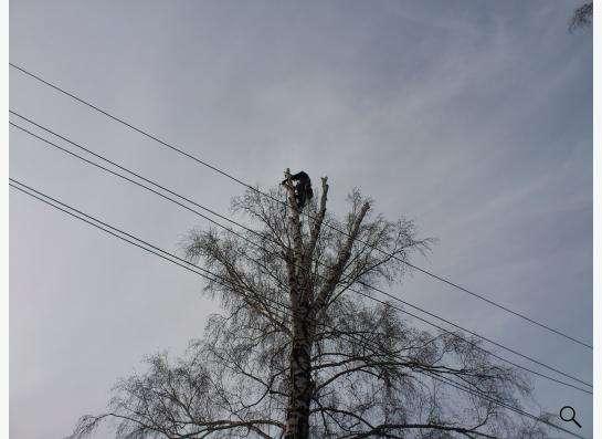 Спил, снос, удаление аварийных деревьев в Новосибирске фото 3