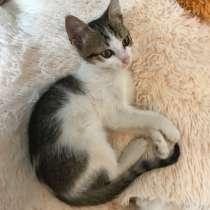 Котенок девочка, в г.Краснодар