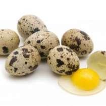 Перепелиные яйца домашние, в г.Буча
