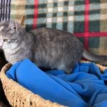 Кошечка Мия, в Краснодаре
