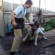 Дрессировка собак в Новокузнецке, в Новокузнецке