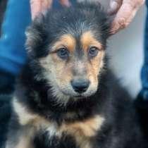 Герда, милая, ласковая щенулька-подросток в добрые руки, в г.Санкт-Петербург