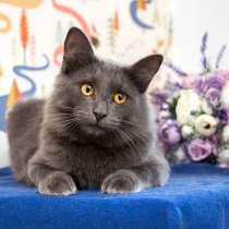 Чудо-мальчик Кузенька, нежный, ласковый котик в добрые руки, в г.Москва