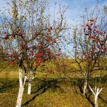Обрезка плодовых деревьев, в г.Макеевка