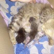 Породам котят, в Оренбурге
