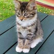 Бесподобный полосатый крошка-котенок Милашка в добрые руки, в г.Москва