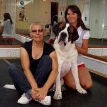 Дрессировка собак - шоу-тренинг и общий курс послушания, в Новосибирске