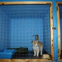 Передержка для котов, в г.Одесса