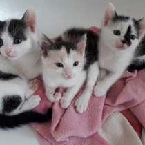 Три котенка симпатяги, в г.Карлсруэ