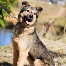 Маленький ласковый пёсик ищет дом, в г.Санкт-Петербург