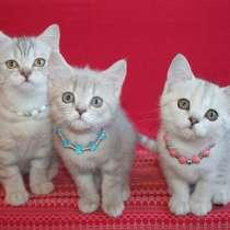 Роскошные котята, в Санкт-Петербурге