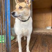 Красавица Ханна, очень умная и добрая собака ищет дом, в г.Москва