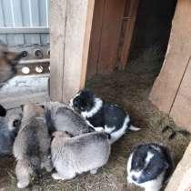 Продам щенков Восточно-Сибирской лайки, в Хабаровске