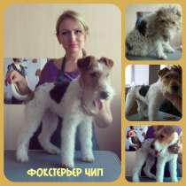 Стрижка собак и кошек различных пород, в Ростове-на-Дону