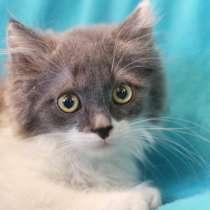 Симпатичный котенок Мистер Икс ищет дом!, в г.Москва