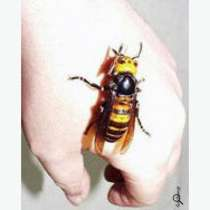 Шершни осы уничтожить травить вывести томск, в Томске