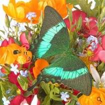 Живые бабочки в подарок, в Новосибирске