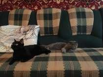 Передержка кошек на дому (в период командировок и отпусков), в Ростове-на-Дону