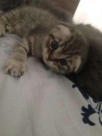 Отдам котят в хорошие руки ❤️, в Воронеже