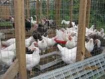 Мясо домашней птицы, в Твери