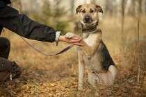 Замечательные собаки, братики Мухтар и Фред ищут хозяев, в Москве