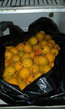 Продаются абрикосы, в г.Балхаш