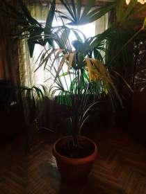 Растения, в Санкт-Петербурге