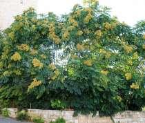 Продаем саженцы всех видов хвойные,лиственные и декоративные, в г.Тараз