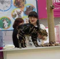 Котята с отличной родословной, в Иркутске