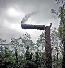 Спил деревьев, в Брянске