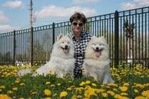 Самоед щенки, в Ханты-Мансийске
