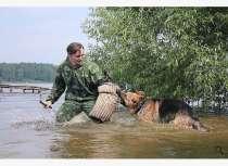 Дрессировка собак в вашем городе!, в Москве