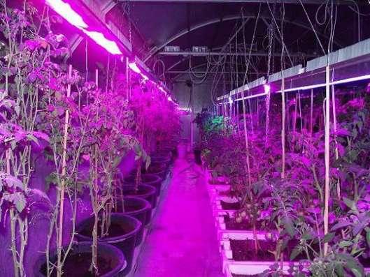 Светодиодный светильник для растений (фито)