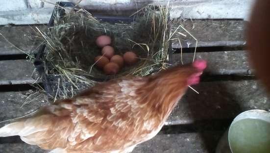 Яйца домашние куриные диетические