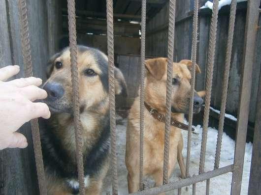 Гостиница для собак и кошек в Пензе