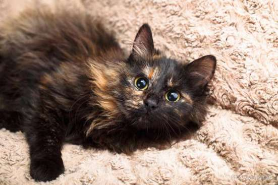Живописная ясноглазая кошка Джейн в дар