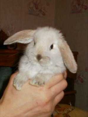 Декоративные вислоухие крольчата в Березниках Фото 1