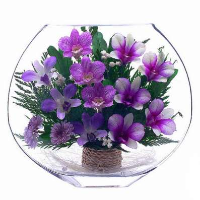 Орхидеи фиолетовые тёмные в Москве Фото 4