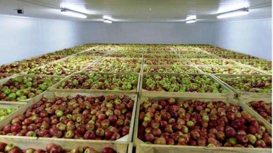 Монтаж холодильных камер для хранения яблок в Крыму. в г. Симферополь Фото 5