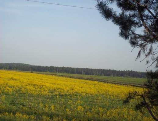 Продается земельный участок 10 соток в д. Межутино Можайский р-н, 143 км от МКАД по Минскому шоссе Фото 1