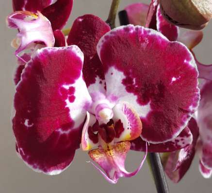 Орхидеи и антуриумы почтой по России