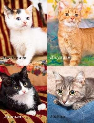 Юные котятки, нежные пятки, ищут дом.