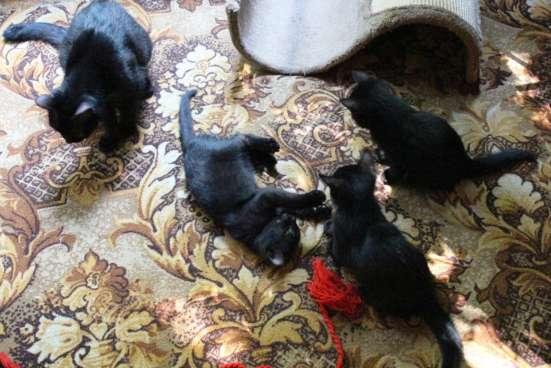 Продам котёнка в Москве Фото 2