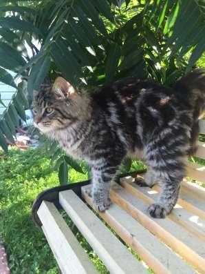Чумовой котик из питомника