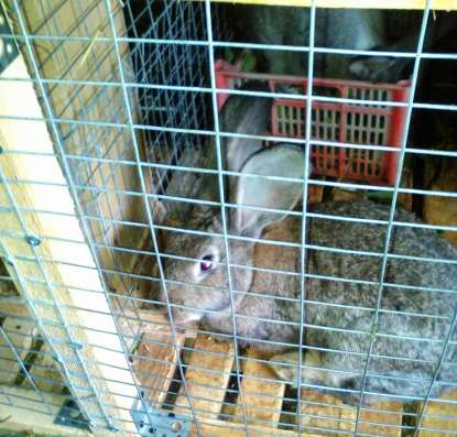 Продам мясо кролика 250 р/кг