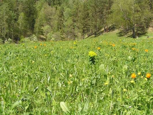 Купить земельный участок в Чемальском районе 6,5 Га в Горно-Алтайске Фото 5