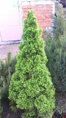 Продаю многолетние растения