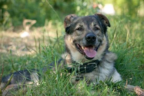 Отдается в дар верный и преданный пес Мартин 5,5 лет! в Москве Фото 1
